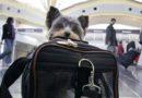 """Mascotas Estelares: Resuelve """"el trauma"""" de emigrar con animales"""